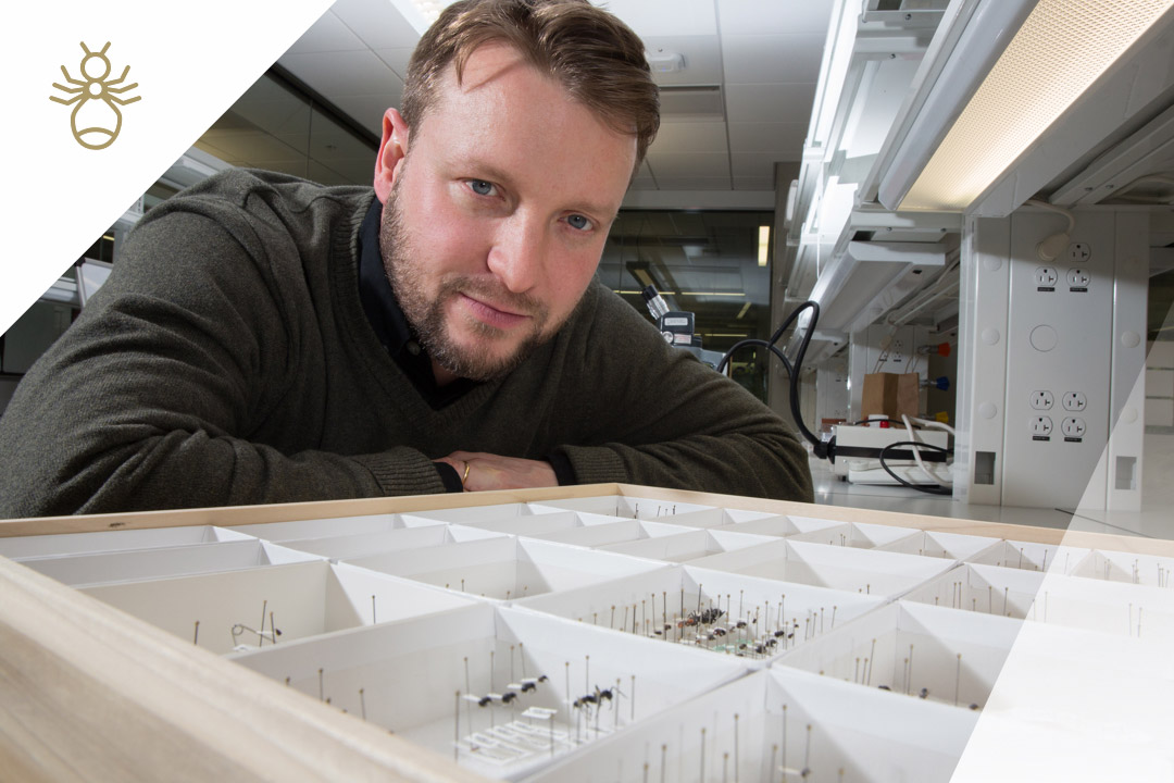 Scott Powell with ants in the lab